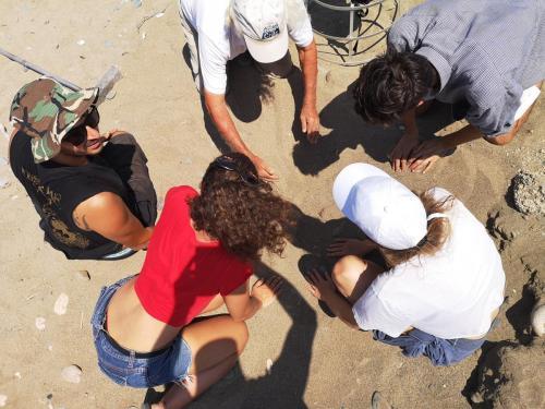 Turtle Run Volunteering Project